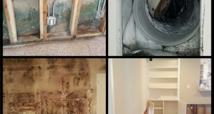 Common Types of Mold Found in Houston and other regions of Texas